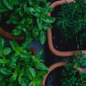 Herbs & Veg